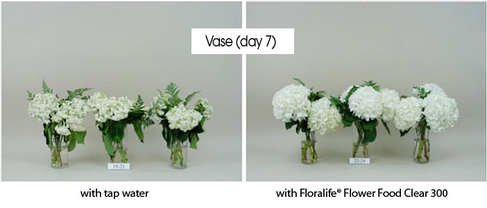 Photos showing the benefits of Floralife® Flower Food Clear 300 in vases with flowers