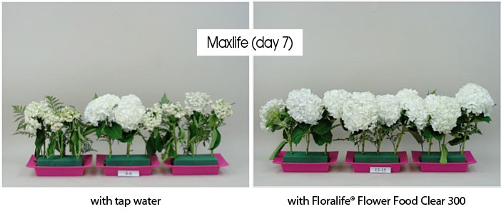 Photos showing the benefits of using OASIS® Floral Foam Maxlife
